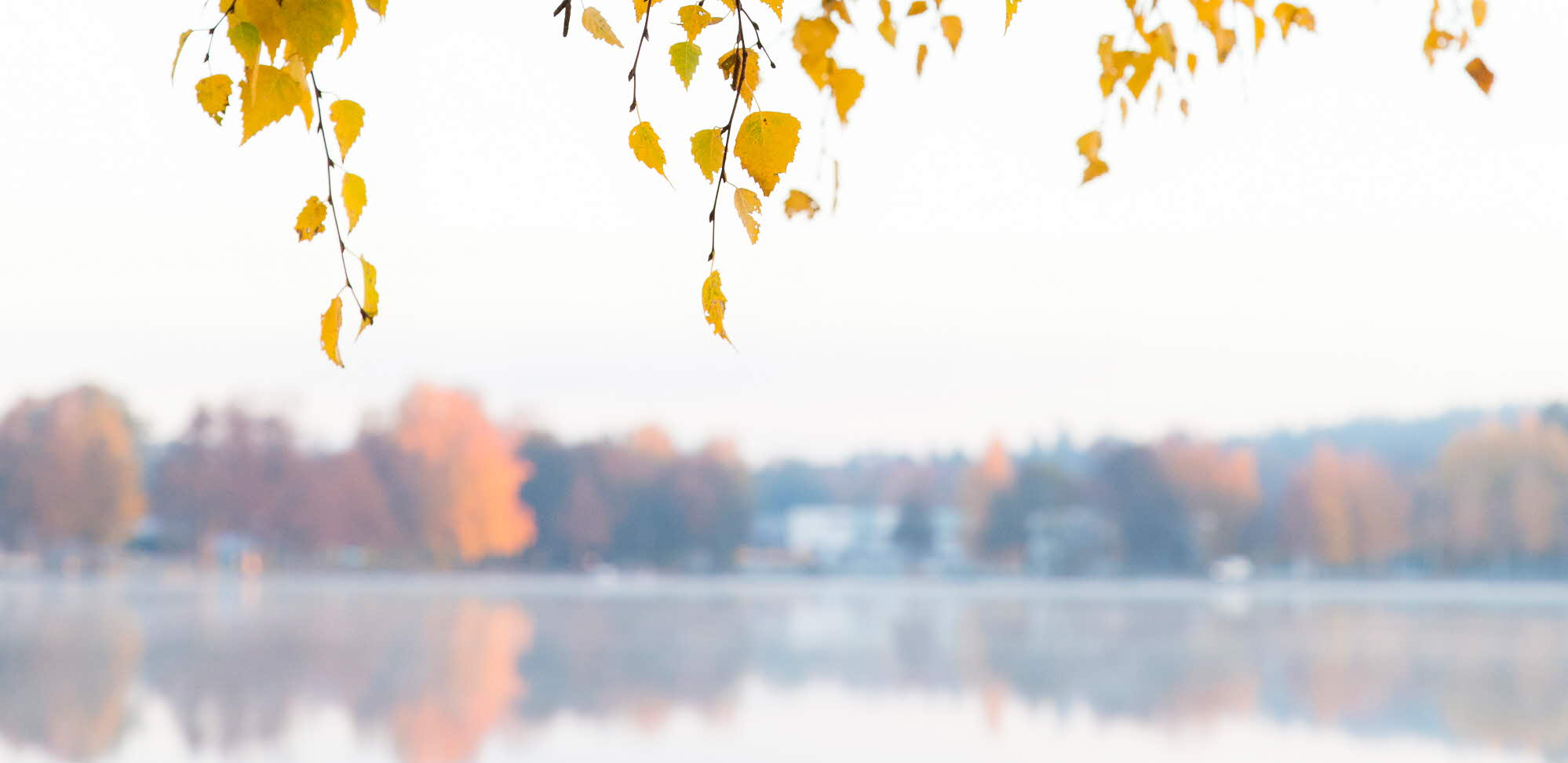 Autumn leaves with a lake in the background