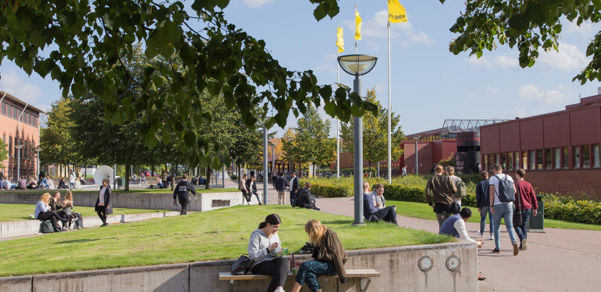 دانشگاه لینوس در سوئد