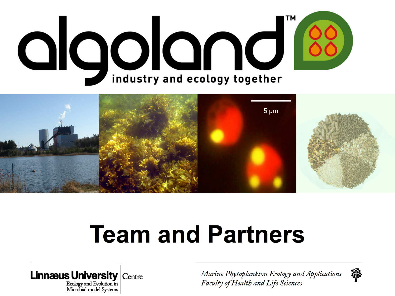 Algoland - Team and Partners