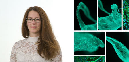 Collage of Ulrika Johansson and microscope images