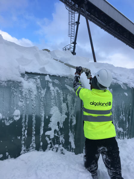 Algoland in Action. Sampling at Moskogen sometimes involves snow shoveling as well! Maurice Hirwa brushes snow off of the experimental tent at the Algoland Moskogen experiment.