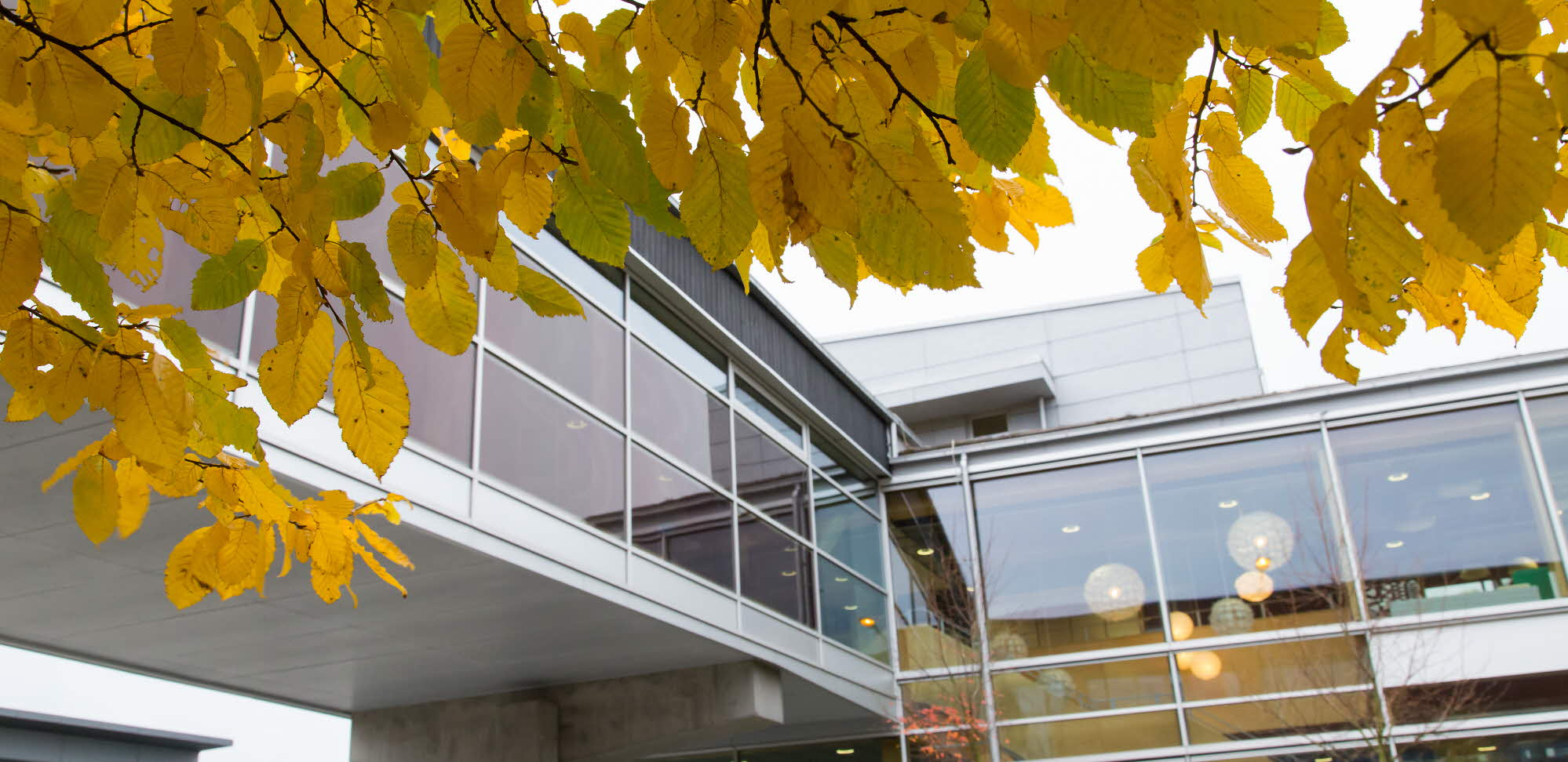 University building and autumn leaves