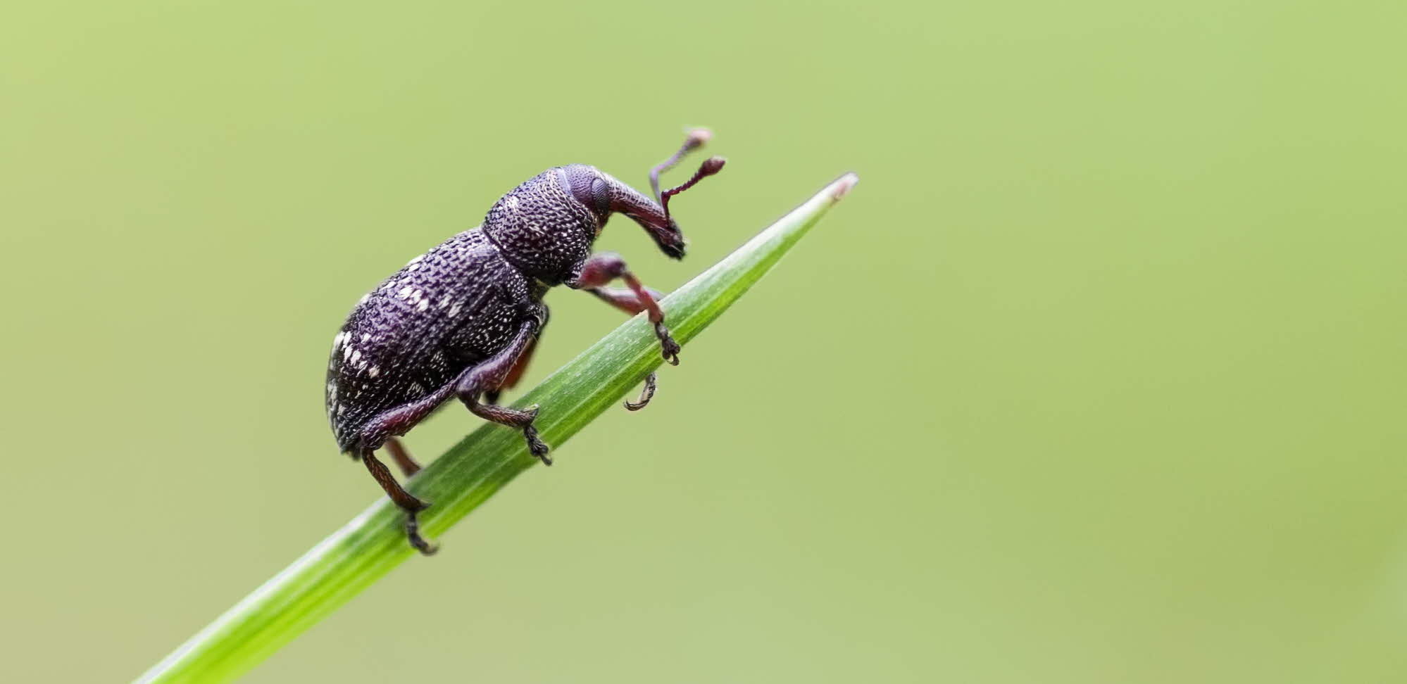 Project: Control of forest insect pests